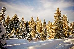 Boston Winter (Rodrigo Blanco Photographer) Tags: christmas winter snow boston chelsea newengland patrick arboretum ibis sophia rocco gabriella