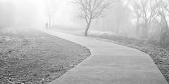 Camiñando entre a névoa (Alberte A. Pereira) Tags: bw portugal bn bp névoa vilanovadecerveira