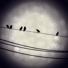 Birds on a Wire (racheldelr9) Tags: bird nature birds silhouette bokeh wires