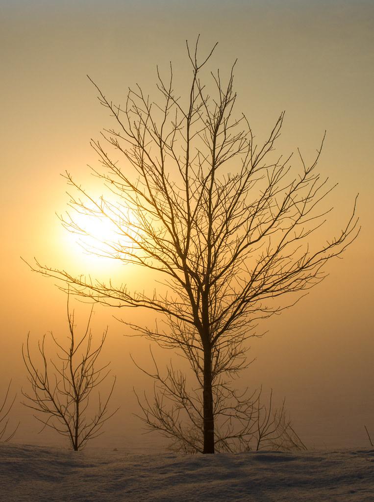 Matin d'hiver brumeux