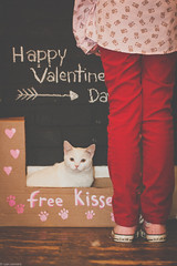 In line for free kisses (Kilkennycat) Tags: pink love girl cat canon children kitten child kisses valentine converse whitecat catinbox valentinesday kissingbooth 500d 100mm28 freekisses kilkennycat t1i ryanconners vision:people=099 vision:face=099 vision:text=0682