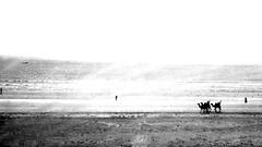 Clifton Karachi (Raja Islam) Tags: pakistan sea beach view camel karachi camels clifton sindh seaview