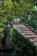 Stone bridge of Klidonia (Dimitil) Tags: animals greece tradition d300 travelphotography epirus konitsa stonebridges naturallife zagorohoria