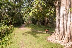 Assam_014 (SaurabhChatterjee) Tags: assam countryside guwahati httpsiaphotographyin india lakhimpur rural saurabhchatterjee siaphotography tea teagardens tezpur village