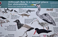 sign at Killough Bay (conall..) Tags: killough bay sign birds wildlife nikonafsnikkorf18glens50mm south county down childlike drawing picture