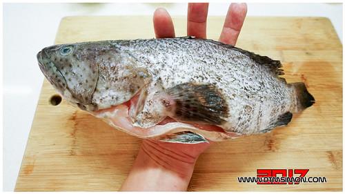 石斑魚03.jpg