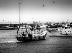 _DSC0295 (Giuseppe Cocchieri) Tags: blackwhite bw blackandwhite black bianconero biancoenero sea mare mood fisherman fishing marinai marinaio boat barche pescherecci atmosfera atmosphere