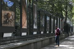 MX TV EXPOSICIÓN EL BANQUETE VISUAL (Secretaría de Cultura CDMX) Tags: chapultepec fotografías exposición maíz evm banquete deméxico cdmx méxico