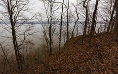 Lake Pepin Through the Trees (Tony Webster) Tags: frontenac frontenacstatepark lakepepin minnesota mississippiriver earlyspring forest leaves spring statepark trees unitedstates us
