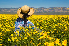 Among The Flowers (Mimi Ditchie) Tags: carrizo carrizoplains spring flowers wildflowers getty gettyimages mimiditchie mimiditchiephotography