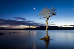 Milarrochy Bay (Alec-Gibson) Tags: milarrochybay lochlomond tree scotland longexposure lightpainting moon