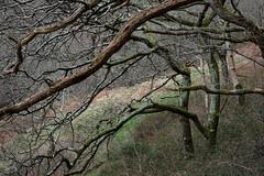 2JAC3274_exmoor_170313 (_husky_) Tags: devon exmoor exmoornationalpark fuji1655 fujixt1 nationaltrust somerset watersmeet