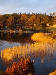 sunset (helena.e) Tags: helenae sunset solnedgång saxebäcken water mjörn sjö lake