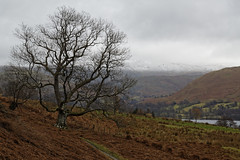 Ullswater (will668) Tags: ullswater cumbria lakedistrict mountains snowcappedmountains trees tree green nature evergreens lake water landscape woods forest