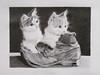 OPERE ALLIEVI (Laboratorio Artistico Mimina) Tags: drawing sketching graphite grafite disegno gattini kittens corsodipitturamilano laboratorioartistico