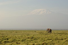 Kili  Really Is Quite Magical (The Spirit of the World) Tags: elephant mtkilimanjara kili grass kenya amboselinationalpark gamereserve landscape snow mountain africa eastafrica nature wildlife