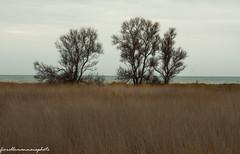 mare all orizzonte (fiorellomannaia) Tags: selvatico selvaggio santasevera nature marenatura macchiatonda regionelazio oasi areaprotetta wild aurelia flora avifauna park fauna riservanaturale castello civitavecchia