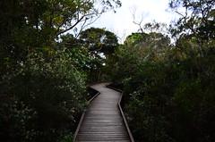 Springbrook, QLD, Australia (phudd23) Tags: queensland qld australia springbrook national park springbrooknationalpark