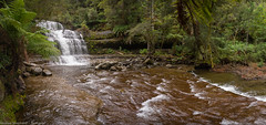 Liffey Falls (Andrew Shepherd) Tags: liffeyfalls d610 lightroom nikon tasmania day landscape outdoor rainforest trees waterfall