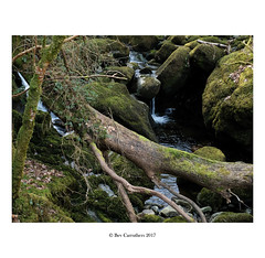 down in the gorge... (bevscwelsh) Tags: gorge waterfall log moss trees leaves gwynedd northwales fujifilmx100f