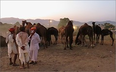 Time to Relax .... (Mary Faith.) Tags: camel fair pushkar india 2016 animal people evening sunset smoking auction