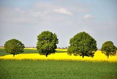 Four for spring (FleurdeLotus28) Tags: spring printemps nature jaune yellow green vert color couleurs champ field campagne countryside paysage land landscape tree arbre line ligne beauce eureetloir nikon