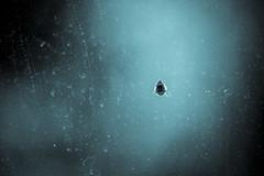 Alien World (eskayfoto) Tags: canon eos 700d t5i rebel canon700d canoneos700d rebelt5i canonrebelt5i monochrome mono bw blackandwhite sk201703309305editlr sk201703309305 lightroom ladybird ladybug insect window glass light spring march crawling
