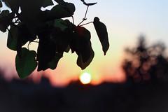 Day 230 (inbar_stern) Tags: sun sunset light lights nature
