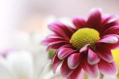 IMG_0488 (nelson_tamayo59) Tags: flor temporada primavera jardin tenerife canarias islas naturaleza