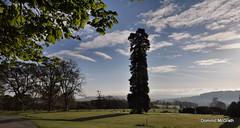 Lone Pine. (mcgrath.dominic) Tags: landscape botanicgardens kilmacurragh cowicklow