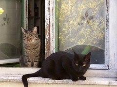 Murr & Merlin (wolfgraebel) Tags: kater katzen cats fenster window kitty miez content