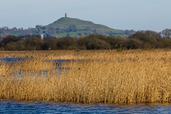 Avalon Marshes (*Hairbear) Tags: reeds glastonbury rural uk somerset water avalon tor spring hills marshes isleofavalon marsh