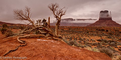 Resilient (color) (OJeffrey Photography) Tags: monumentvalley tree fog pano panorama arizona az nikon d800 ojeffrey ojeffreyphotography han th