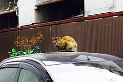 Today's Cat@2017-04-15 (masatsu) Tags: cat thebiggestgroupwithonlycats catspotting pentax mx1