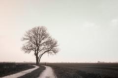 The Tree (Herman1705) Tags: hensbroek noordholland nederland obdam heerhugowaard wogmeer boom tree ennamünchen lithagon 28mm a500 fullspectrum lente spring nik uv ultraviolet