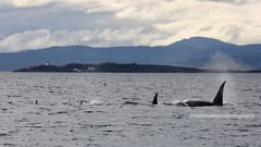 March 27 - T046E and gang south of Oak Bay (Whale_Sightings) Tags: t046e transient orca march oakbay race lighthouse