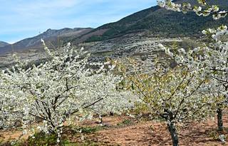 Valle del Jerte 29