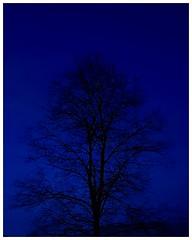 Nature in blue (eagle1effi) Tags: s7 baum trees natur herma werk2 night nightshot nachtaufnahme long exposure longexposure sulzer morat filderstadt raiffeisenstr fabrikstr fabrikstrasse raiffeisenstrasse papierfabrik paper plant fotoecken adhesive bonlanden regionstuttgart fildern filderebene