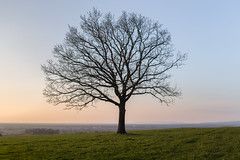 A lonely tree yet to show it's leaves! Explored #286 (Martin - Ginger Photographer) Tags: canonphotography canonuk canon6d canonef35mmf2is landscapephotography landscape landschaft badlippspringe paderborn germany fields noleaves grass sunset sun skies sky flickr