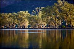 2017 04 09 Rhein bei Lorch 5D - 05 (Mister-Mastro) Tags: rhein rhine lorch germany flus river bäume arbre trees reflexion reflection reflektion