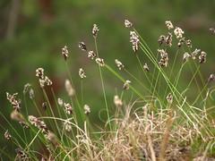 IMG_4726 (germancute) Tags: nature outdoor kanzel plant wildflower flower blume landscape landschaft thuringia thüringen germany germancute wald wiese