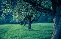 (raimundl79) Tags: wow explore exploreme entdecken explorer erde earth tree bestpicture beautifullandscapes baum fotographie flickrr flickrexploreme foto follow4follow photographie landschaft österreich vorarlberg landscape lightroom ländle austria image nikon nikond800 nüziders tamron2470mm