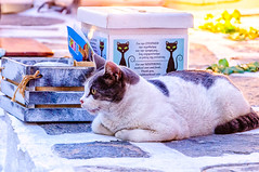 Cat Corner (Kevin R Thornton) Tags: d90 nikon travel street parikia mediterranean greece animal cats paros egeo gr