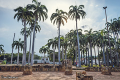 Park of History (Juanpagraphics) Tags: palmas palms nature park beach landscape sky