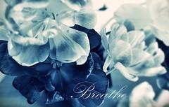 Deeply (nathaliedunaigre) Tags: bleu blue fleurs flowers macro monochrome détails details breathe respirer
