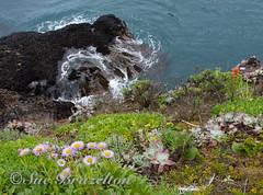 _BRZ0828 (Sue Brazelton Photography) Tags: april2017 california places pointlobos spring
