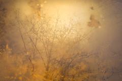 Reflection (Jyrki Salmi) Tags: jyrki salmi kotka finland water reflection