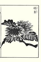 Japanese chestnut (Japanese Flower and Bird Art) Tags: flower chestnut castanea crenata fagaceae sesshosai terai kano woodblock picture book japan japanese readercollection