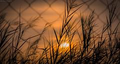 Sunrise (Rasheed Sameed) Tags: canon 600d eos sunrise saudiarabia
