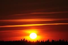 MDD_1654 (Dmitry Mahahurov) Tags: sunset sun russia tosno d300 mahahurov тосно небо закат